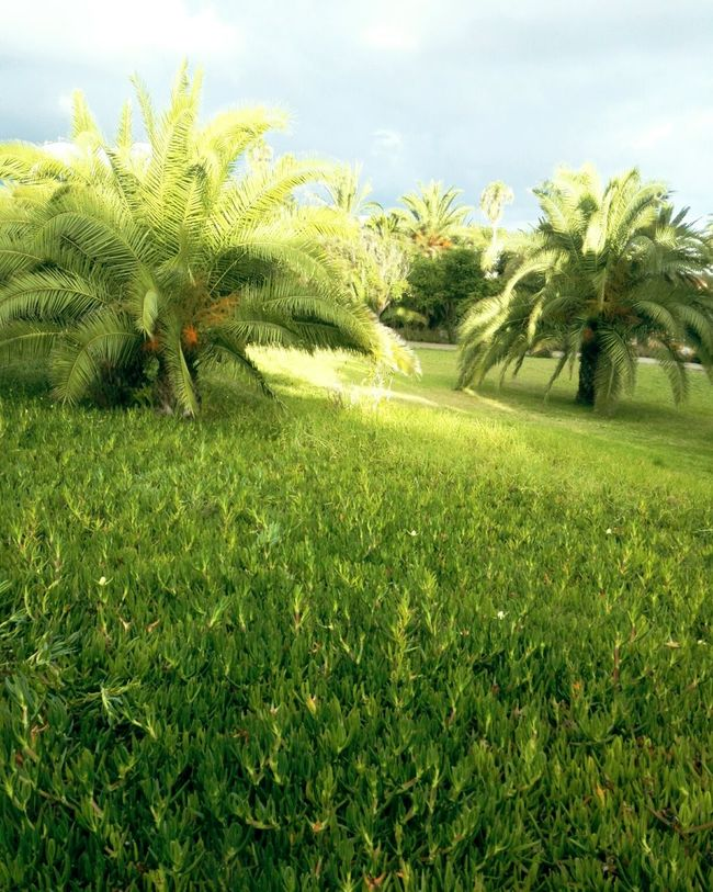 Grass Green Color Tree Tranquility Tranquil Scene Growth Beauty In Nature Park - Man Made Space Scenics Nature Field Plant Sky Day Grassy Flower Outdoors Park Non-urban Scene Cloud - Sky