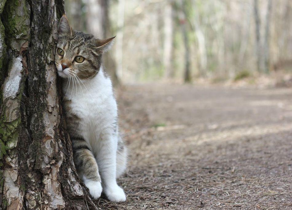 Beautiful stock photos of kitty, Animal Themes, Cat, Day, Domestic Animals