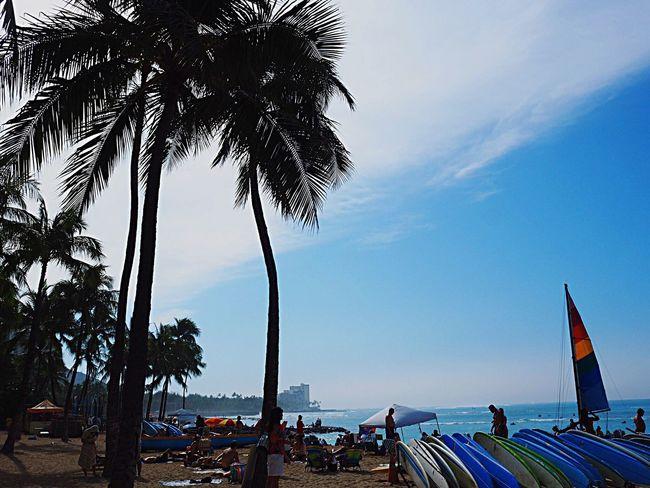 Palm Tree Sea Water Tree Sky Beach Scenics Nature Outdoors Beauty In Nature Traveling Travelers Travel Honolulu  Waikiki Beach Waikiki Hawaii Day Olympus Om-d E-m10 Sun Sunlight Sunlight ☀