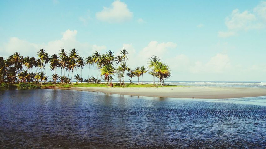 Palm Tree Sea Tree Landscape Beach Water Nature Tourism Vacations Cloud - Sky Outdoors Travel Destinations Sky Tropical Climate No People Day Trinidad And Tobago Trinidad Scenics Nature Coconut Palm Tree Coconut Trees Sunny Day Been There.