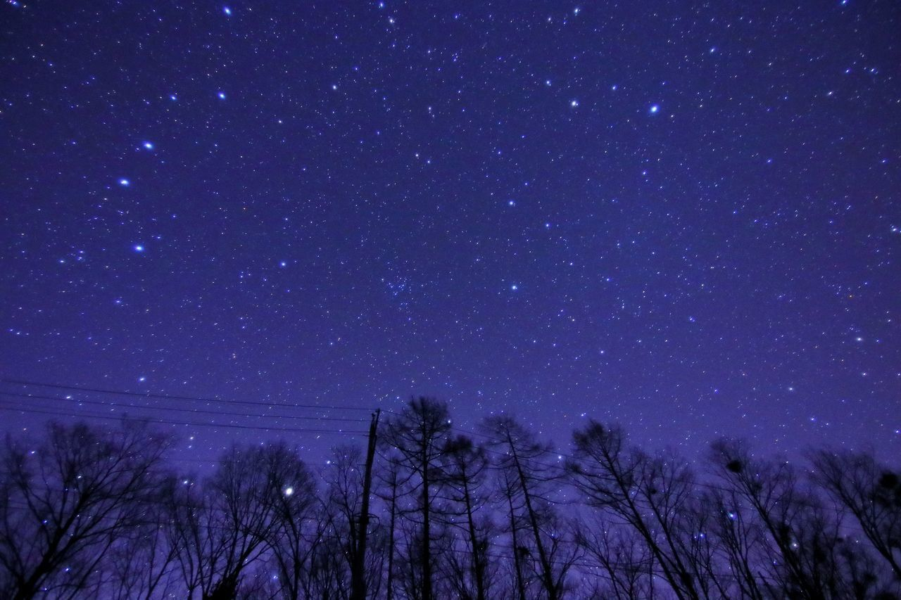 night, low angle view, star - space, nature, sky, no people, astronomy, beauty in nature, tree, tranquility, outdoors, galaxy, scenics, starry, bare tree, constellation, space