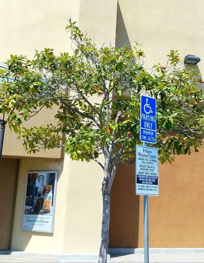 Architecture Tree City Tree Street Sign Shadows