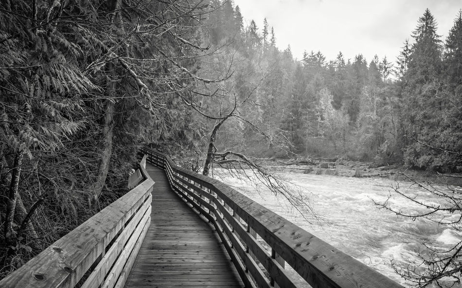 Beauty In Nature Boardwalk Bridge - Man Made Structure Connection Day Footbridge Forest Nature No People Outdoors Railing Scenics Snoqualmie Falls The Way Forward Tranquility Tree Wood - Material