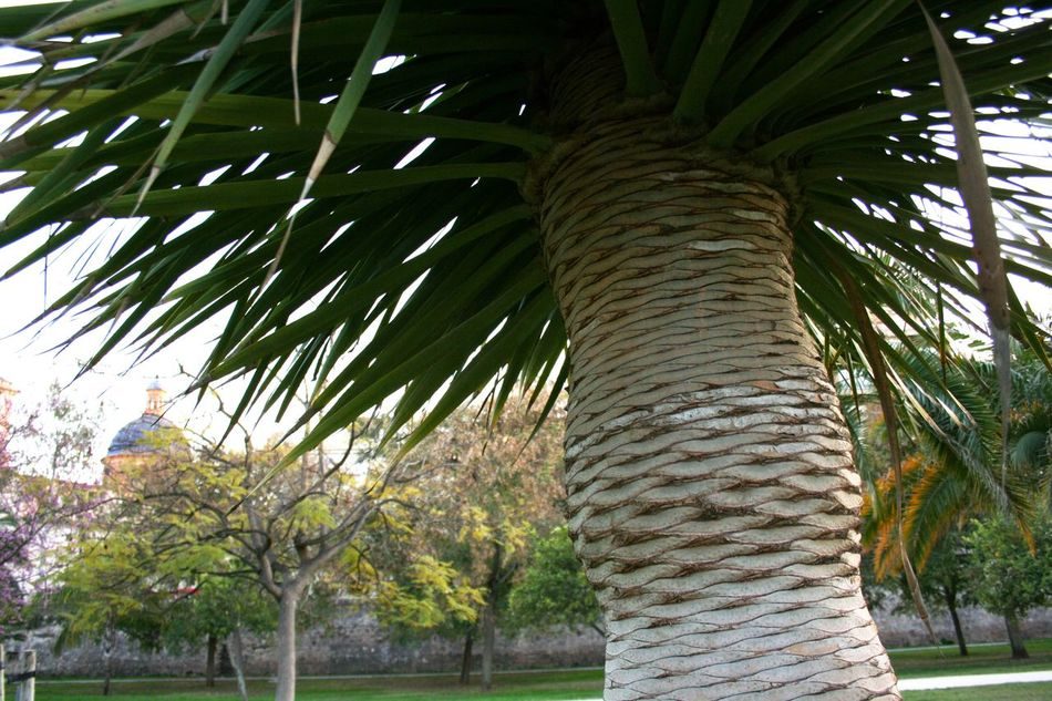 03/2016 Exotic Palms Go Green Green Green Color Palm Palm Head Palm Paradise Palm Tree Palm Tree Leaves Palm Trees Palms Urban Paradise Urban Park The Mix Up