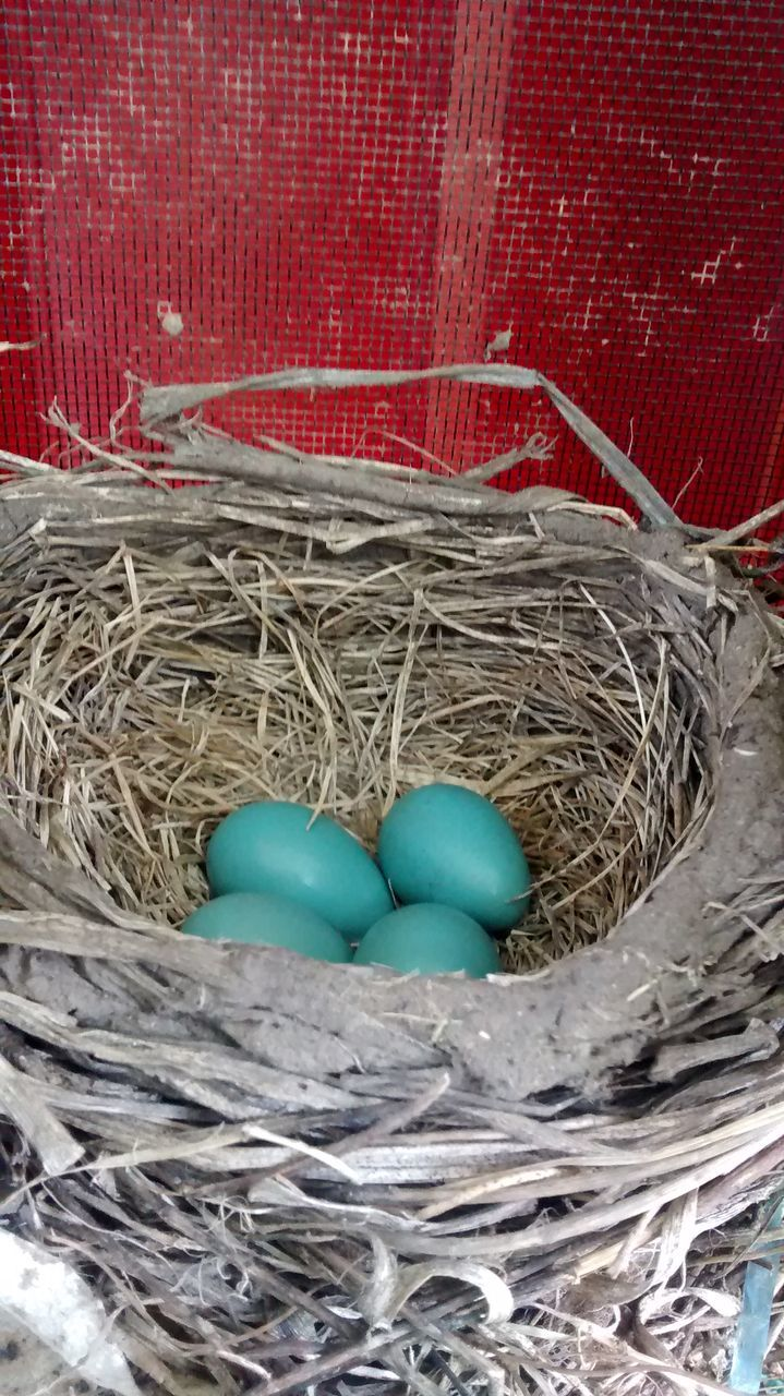no people, high angle view, bird nest, hay, close-up, indoors, blue, fragility, day