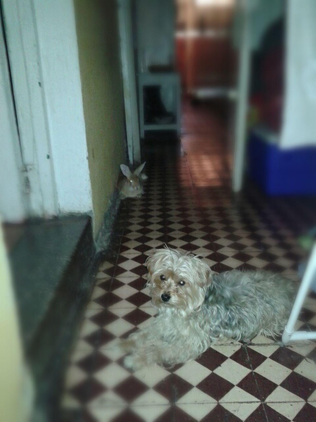 Cuffa & Piritonga ♥ Posando Para La Pipul Coneja Perra Las Adoro ♥