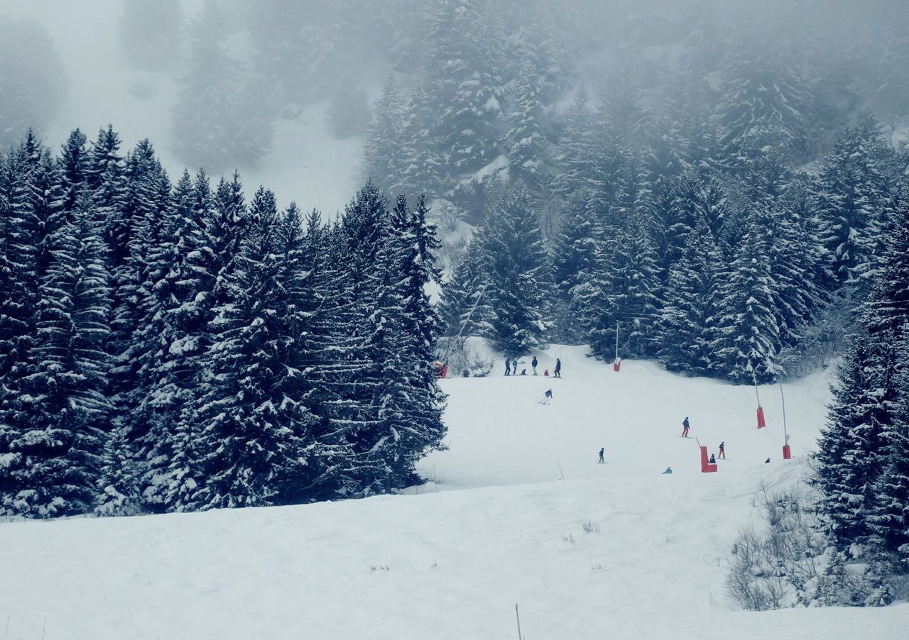 Share Your Adventure Snow Trees Ski Protecting Where We Play Winter White Showcase: February Forest Path The Tourist Travel France Mountains Alps Meribel Trois Vallees Snowsports Sport Things I Like