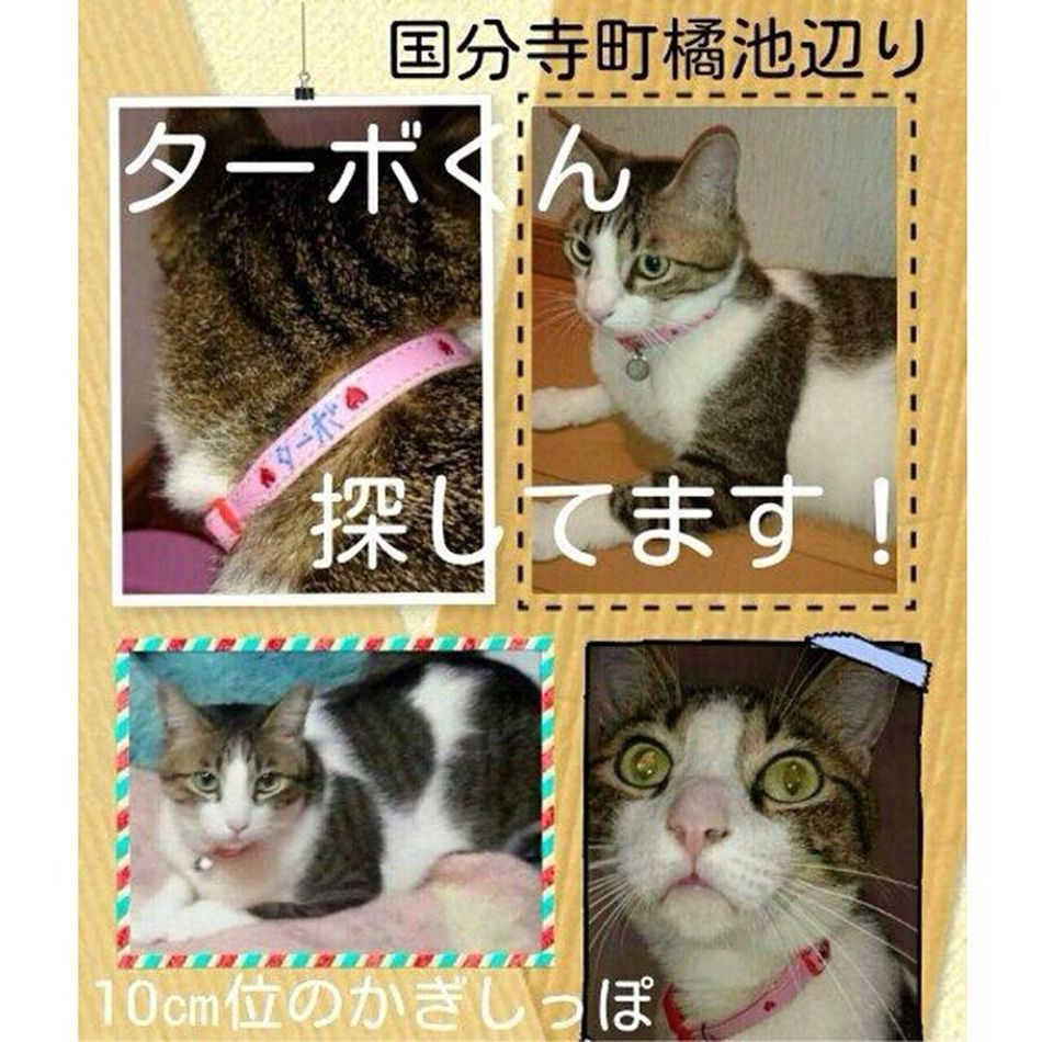 拡散希望 迷い猫 ターボくん すでに行方不明になってから3日以上たっているようなので…とても心配です?場所は香川県の高松市国分寺町の橘池あたりだそうです。近隣の方、もしくは近隣にお知り合いがいる方のご協力をお待ちしております。目撃情報などあると助かります?※画像はtwitteからお借りしました。