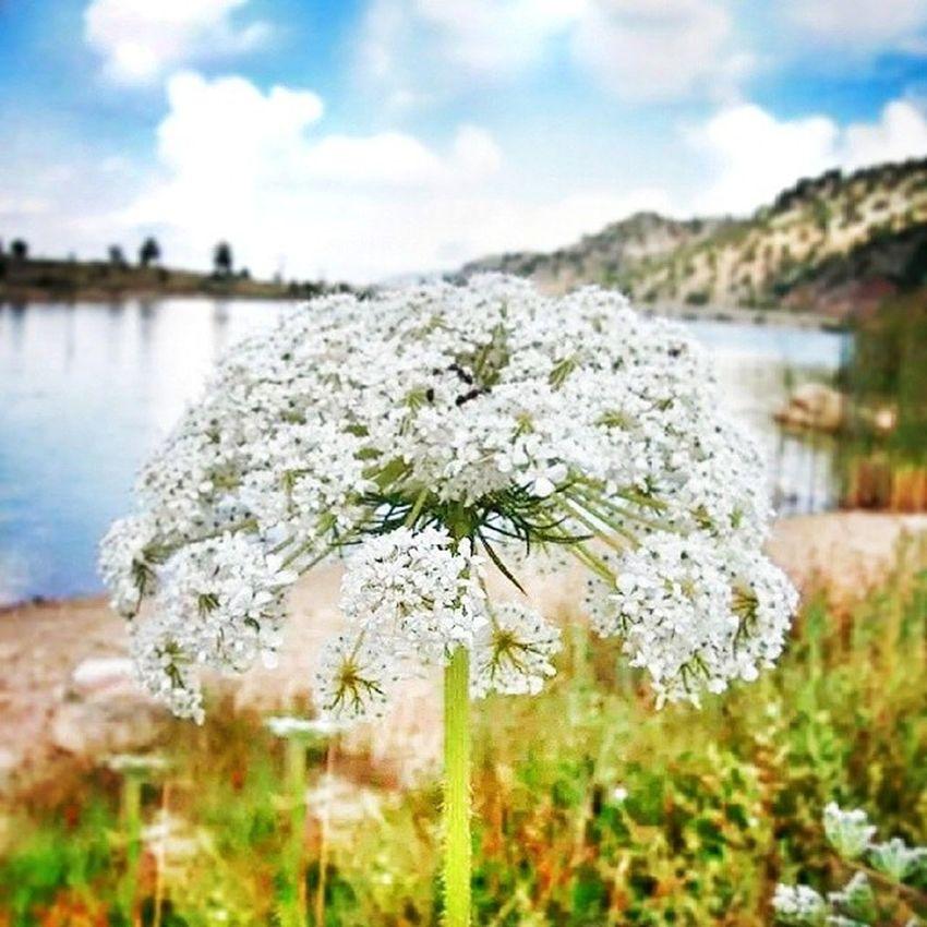 çiçek Golet Doğa Manzara Pond Clouds And Sky Flowers
