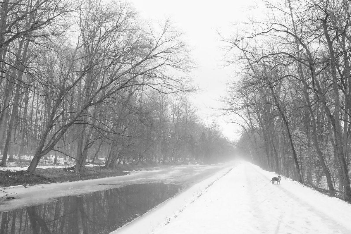 Pitbull Snowy Lonely Blackandwhite