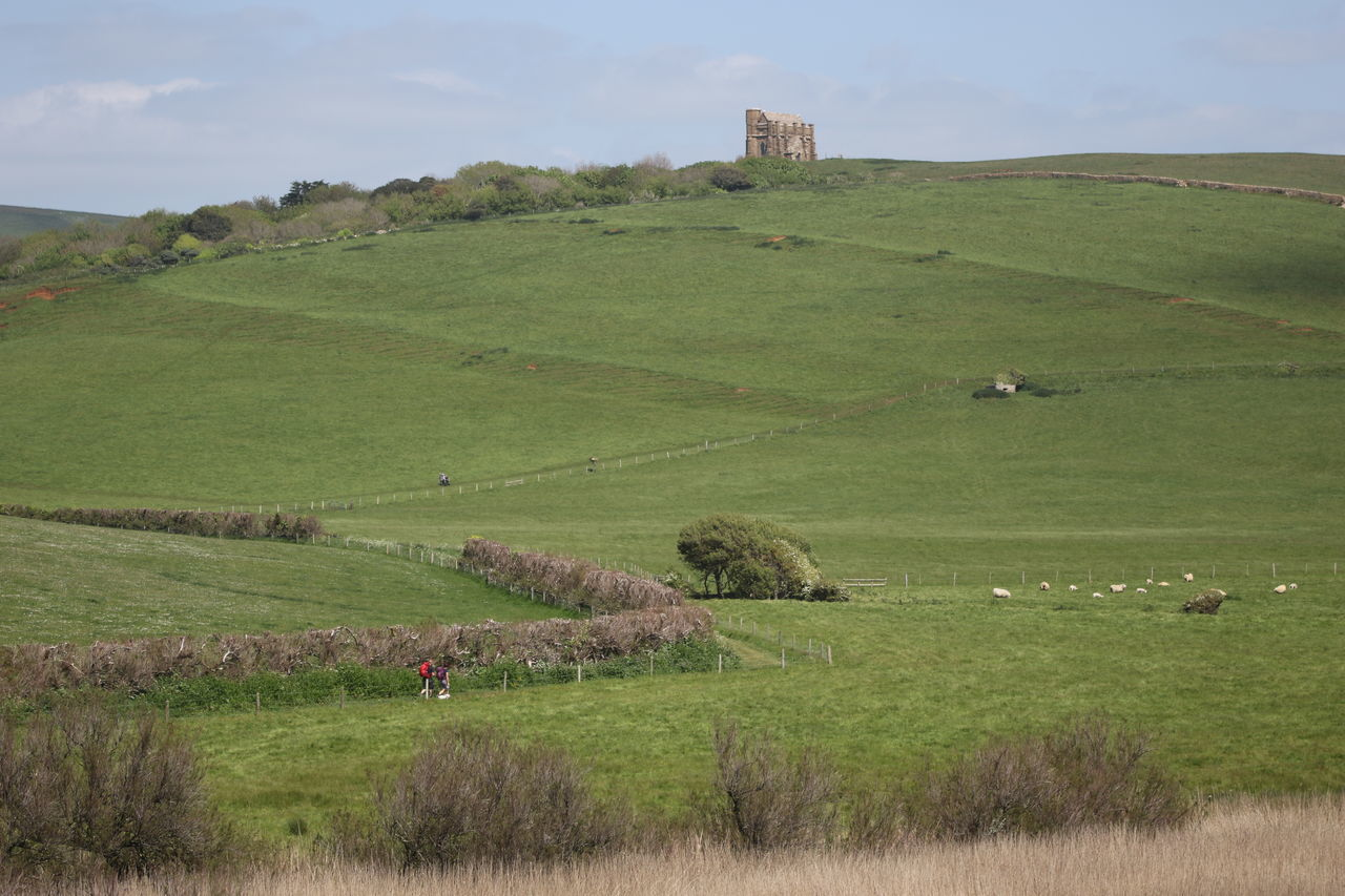 Abbotsbury Agriculture Beauty In Nature Castle Day Dorset Countryside Field Grass Green Color Growth Hill Fort Landscape Mountain Nature Outdoors Rural Scene Scenics Sheep Sky Tranquil Scene Tree Walkers