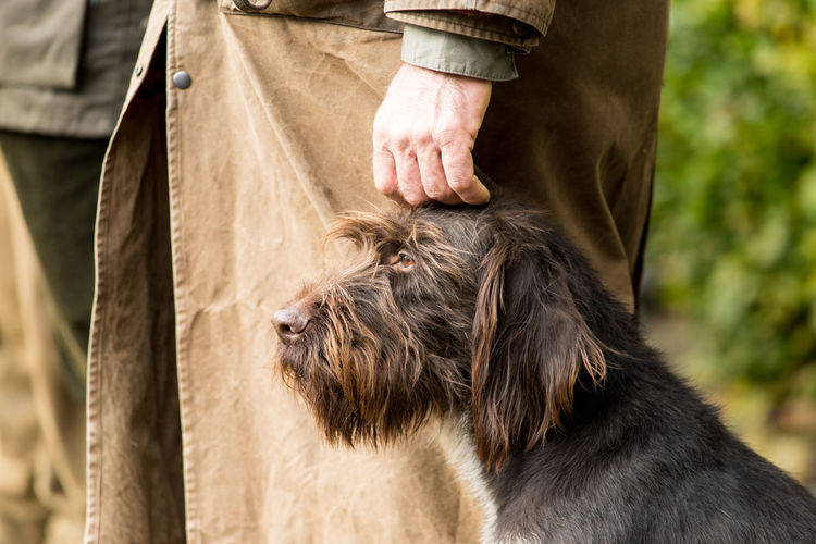 Portrait of a German wirehaired pointer sitting next to his owner the hunter being caressed Caress Hunter Love Obedience Animal Head  Bearded Best Friend Close-up Day Dog Domestic Animals Furry German Wirehaired Pointer Hand Hound Human Body Part Mammal One Animal Outdoors People Pets Pointer Real People Standing Thoroughbred