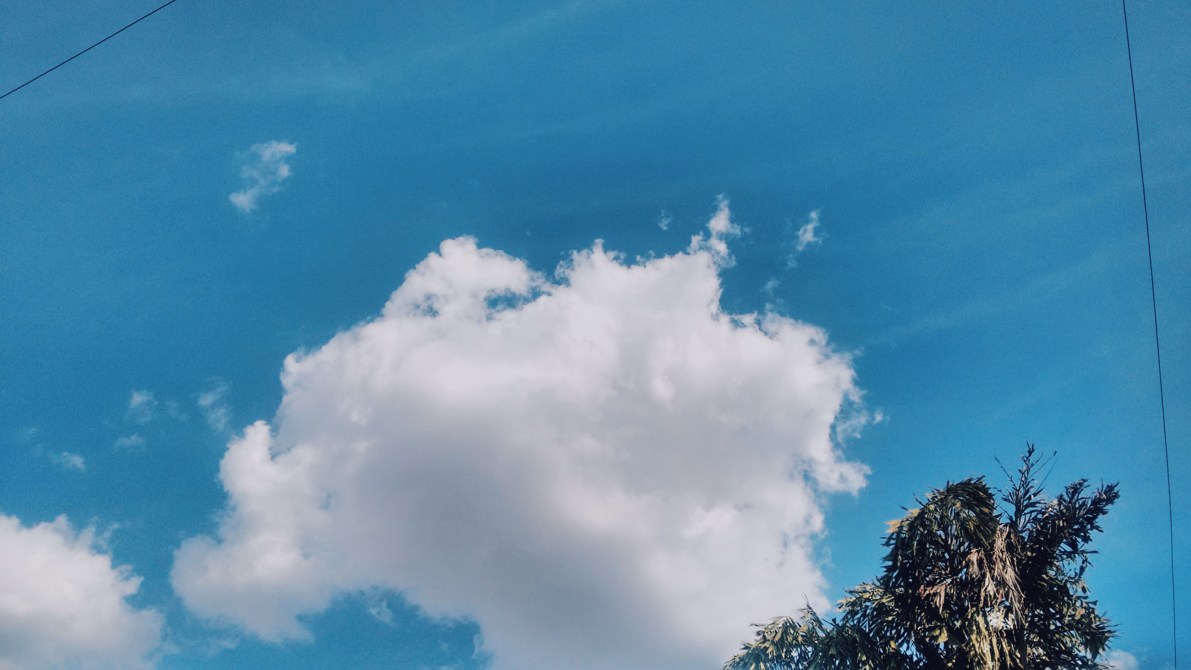 low angle view, sky, cloud - sky, nature, beauty in nature, day, tranquility, no people, outdoors, tree, growth, scenics, treetop