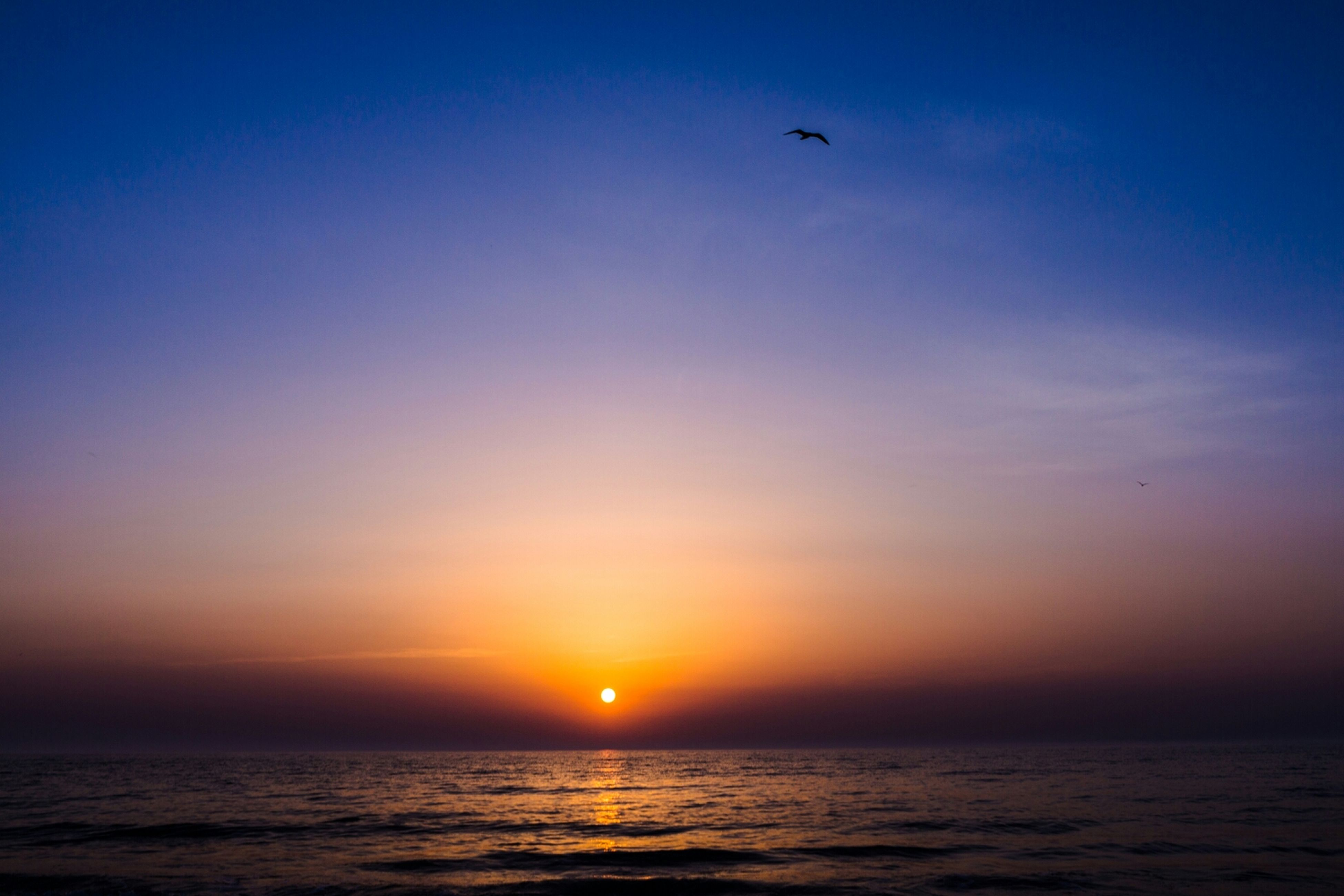 sea, sunset, water, scenics, horizon over water, tranquil scene, sun, waterfront, beauty in nature, tranquility, flying, sky, orange color, idyllic, nature, bird, silhouette, clear sky, copy space, outdoors