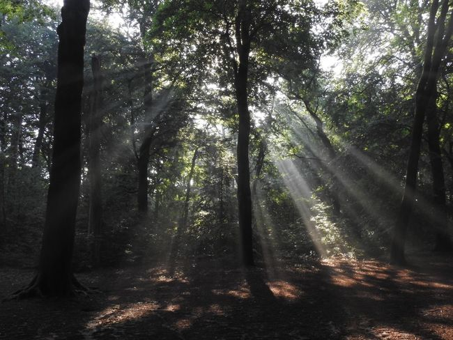 Nature Forest Sunbeam