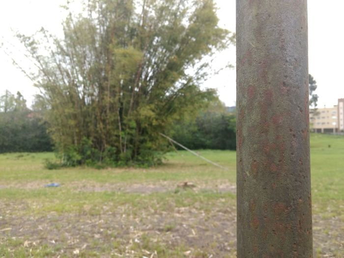 Tree Grass Tree Trunk Nature Day Growth Outdoors No People Sky Focus Minor