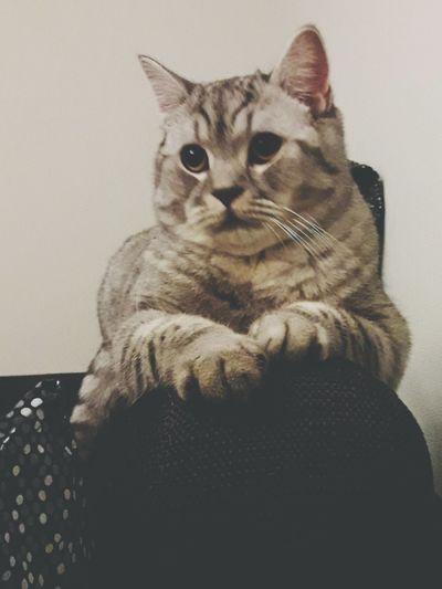 Cat Morris Pets One Animal Animal Themes Sitting No People Cat Morris