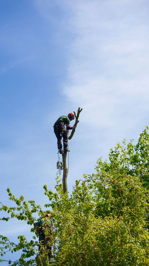Chain Saw Day Full Length Lifestyles Low Angle View Lumberjack Men Nature One Person Outdoors Real People Sky Tree Tree Surgeon
