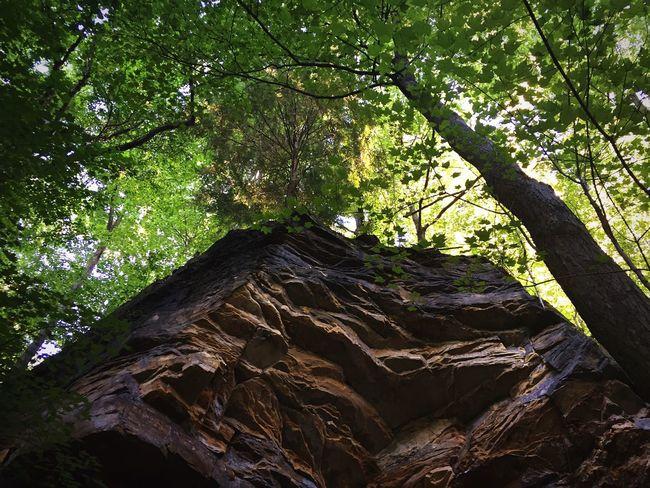 Amazing sights at the park! Rocks Walk Climb Park Nature Trees Sky