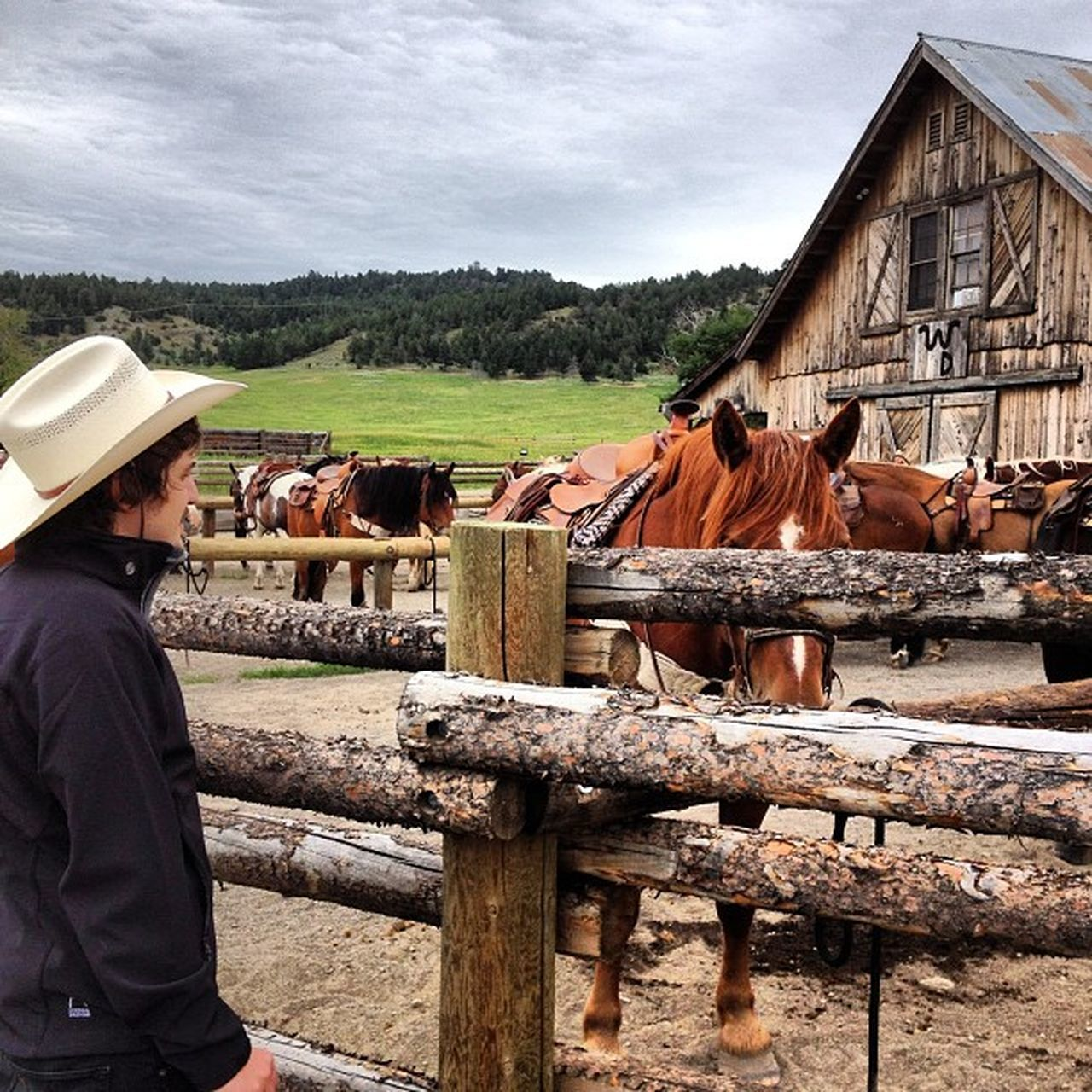 Beautiful stock photos of cowboy, Animal Themes, Architecture, Building Exterior, Built Structure