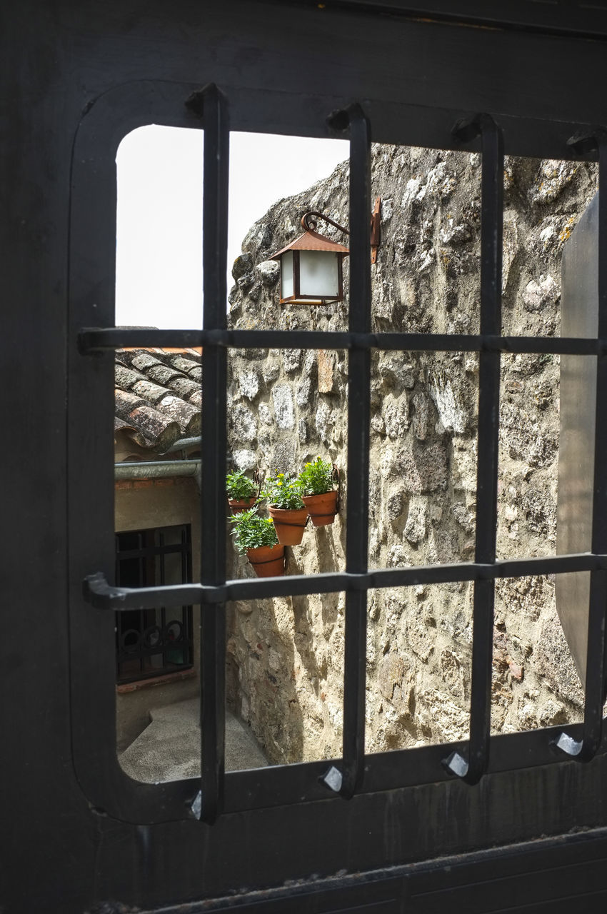 window, indoors, no people, day, built structure, architecture, flower, nature, fragility, animal themes, close-up, freshness