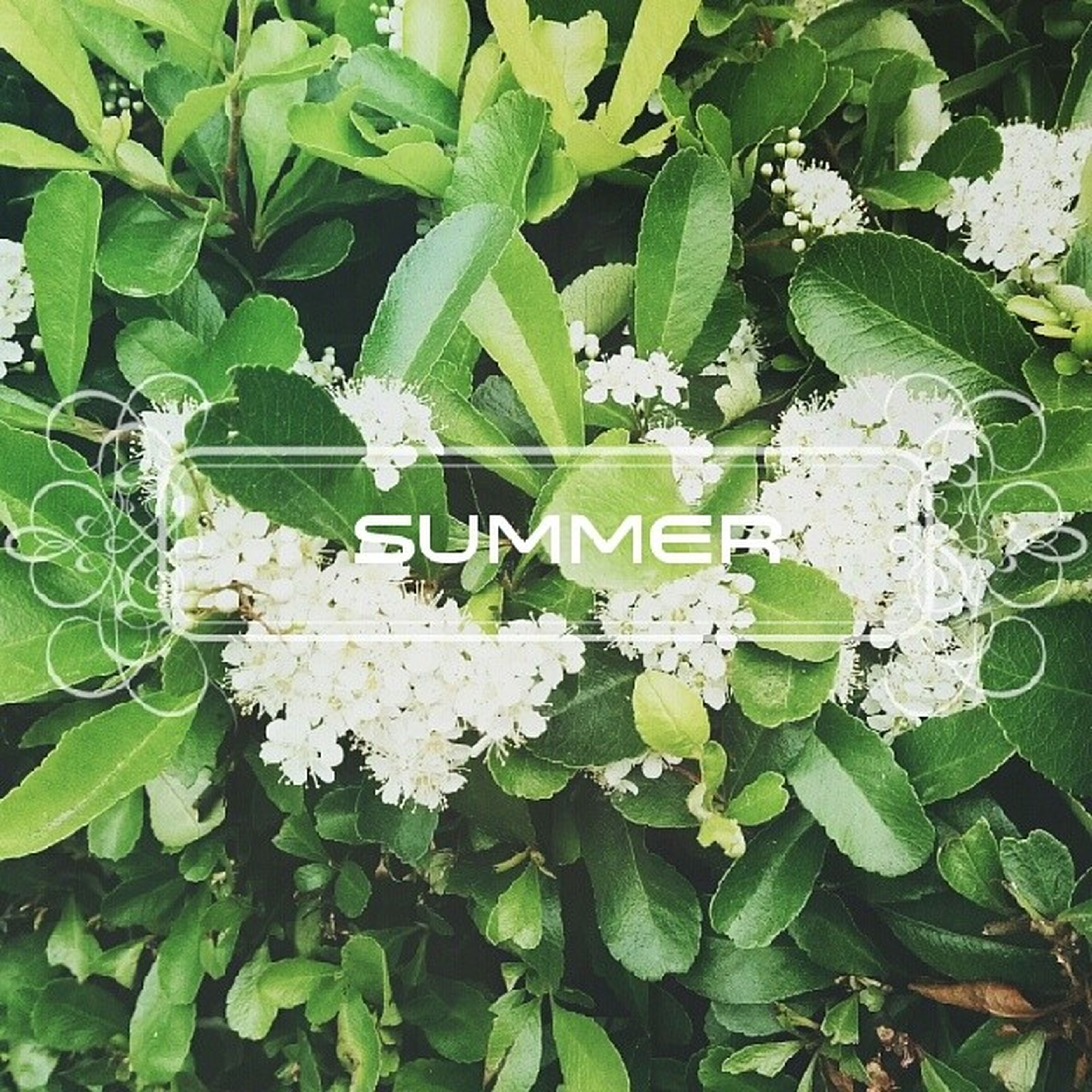 leaf, growth, green color, plant, freshness, flower, nature, high angle view, fragility, beauty in nature, white color, full frame, growing, green, backgrounds, close-up, day, outdoors, no people, leaves