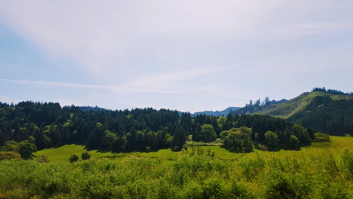 Tree Nature Beauty In Nature Agriculture Cloud - Sky Sky Landscape No People Rural Scene Pine Tree Tranquility Pinaceae Outdoors Forest Scenics Growth Mountain Day Tea Crop Freshness Day Trip Lush Foliage Drain, Oregon Beautiful Weather The Great Outdoors - 2017 EyeEm Awards Lost In The Landscape