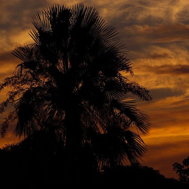 Karanday Palmera Chacoparaguayo Chaco Sunrise Cloud Clouds Landscape Naturelovers Naturestyles Nature Silueta Contrast Great_captures_paraguay Fuerteolimpo Paraguay