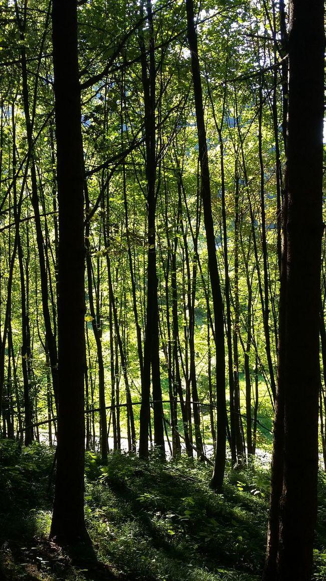 Wood Dolomiti Bellunesi Mymountain Mountain Mis, Veneto Italy Home Is Where The Art Is Colour Of Life