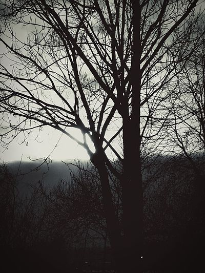 Black Day Tree Bare Tree Silhouette Branch Nature Tranquility Beauty In Nature Outdoors No People Winter Low Angle View