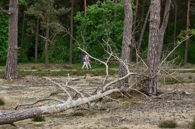 Remnants of natural decay Beauty In Nature Day Hiking Landscape Nature Netherlands Outdoors Tree Tree Trunk Veluwe Walking