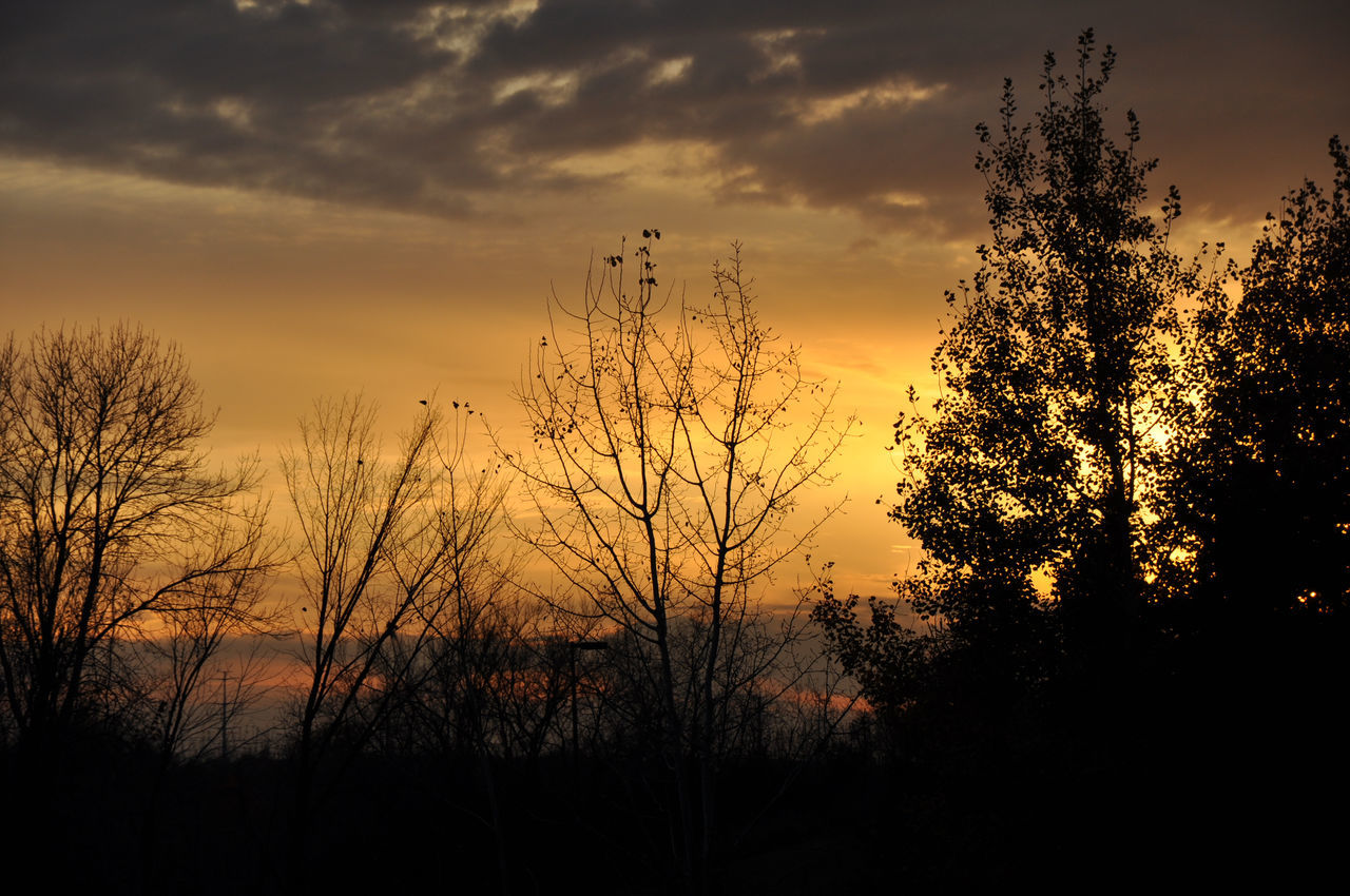 sunset, silhouette, tranquil scene, sky, beauty in nature, nature, tranquility, tree, scenics, no people, outdoors, cloud - sky, growth, plant, landscape, day