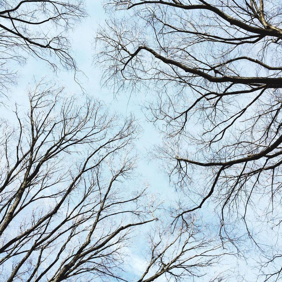 Infinit ..... Blue Sky Blue Sky Memories t Tres Treesilhouette Showcase: February Learn & Shoot: Balancing Elements