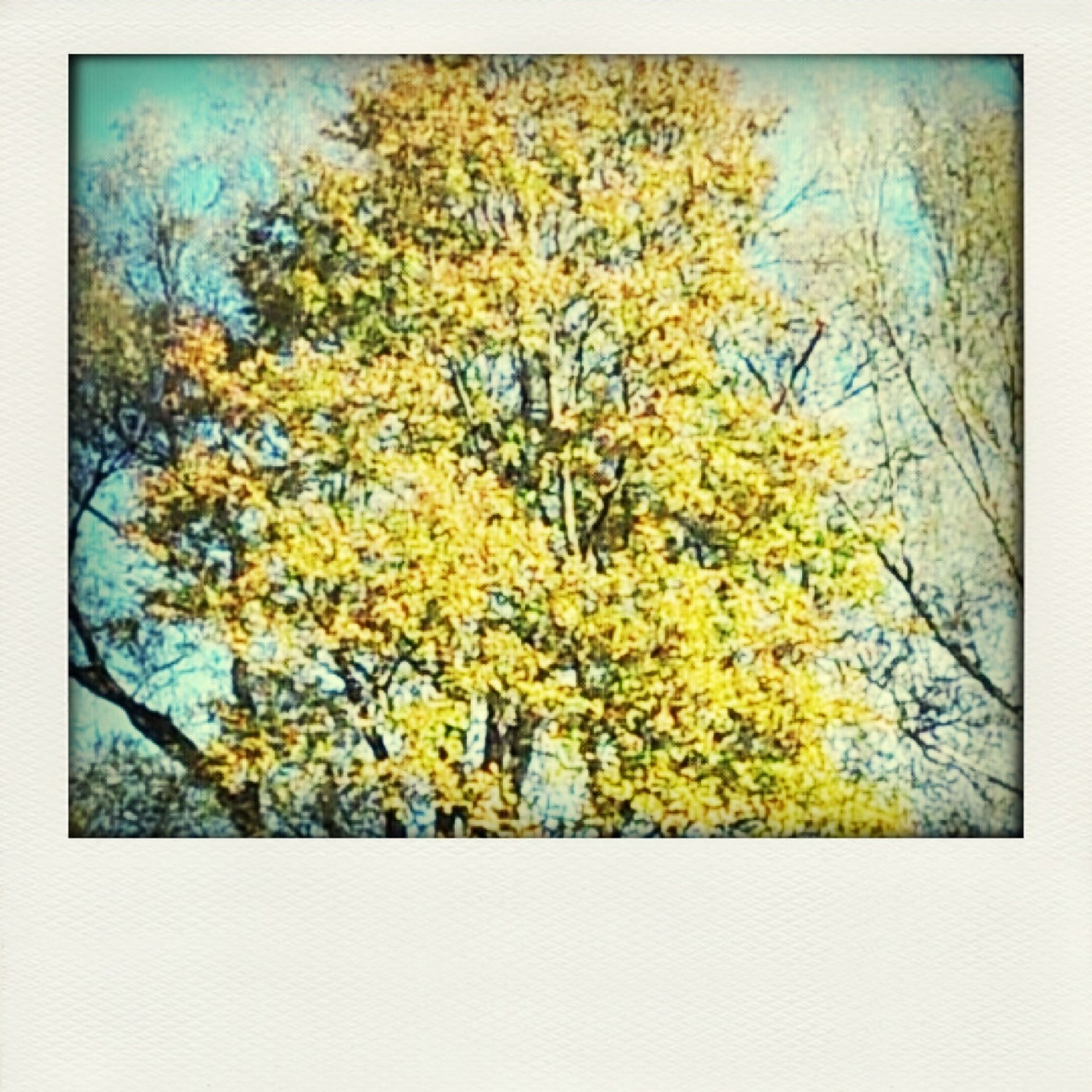 tree, transfer print, branch, growth, autumn, beauty in nature, yellow, auto post production filter, nature, tranquility, change, season, low angle view, tranquil scene, scenics, leaf, sky, no people, outdoors, day