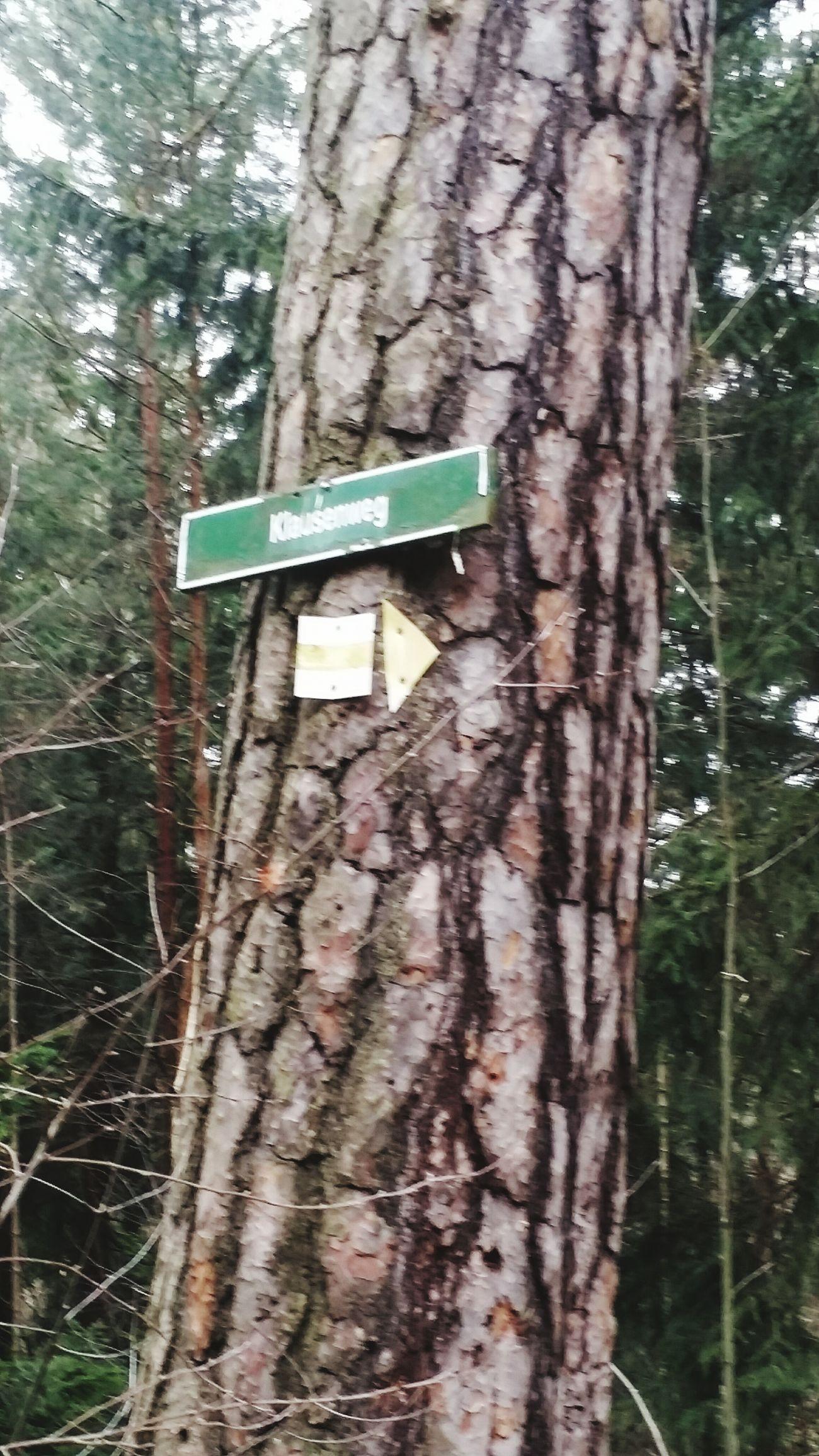 Dippoldeswalde Forest Walk Nature Eeyem EeYem Best Shots Eeyem Photography Eeyem Nature Lover ????