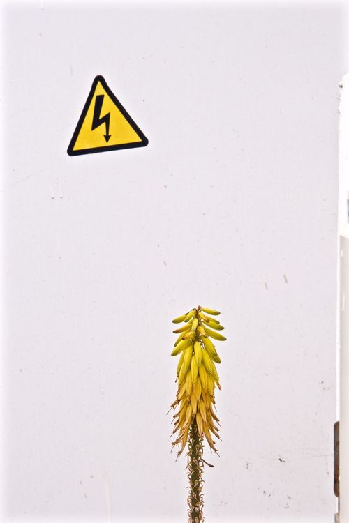 Canarias Canaries Canary Islands Lanzarote Island Sign Streetphotography White Wall Yellow Flower. Fine Art Photography