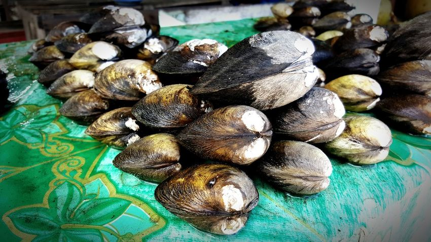 Freshness Close-up Food Nature Shell Stacked Up Swamp Creature Water Wild Market Catch
