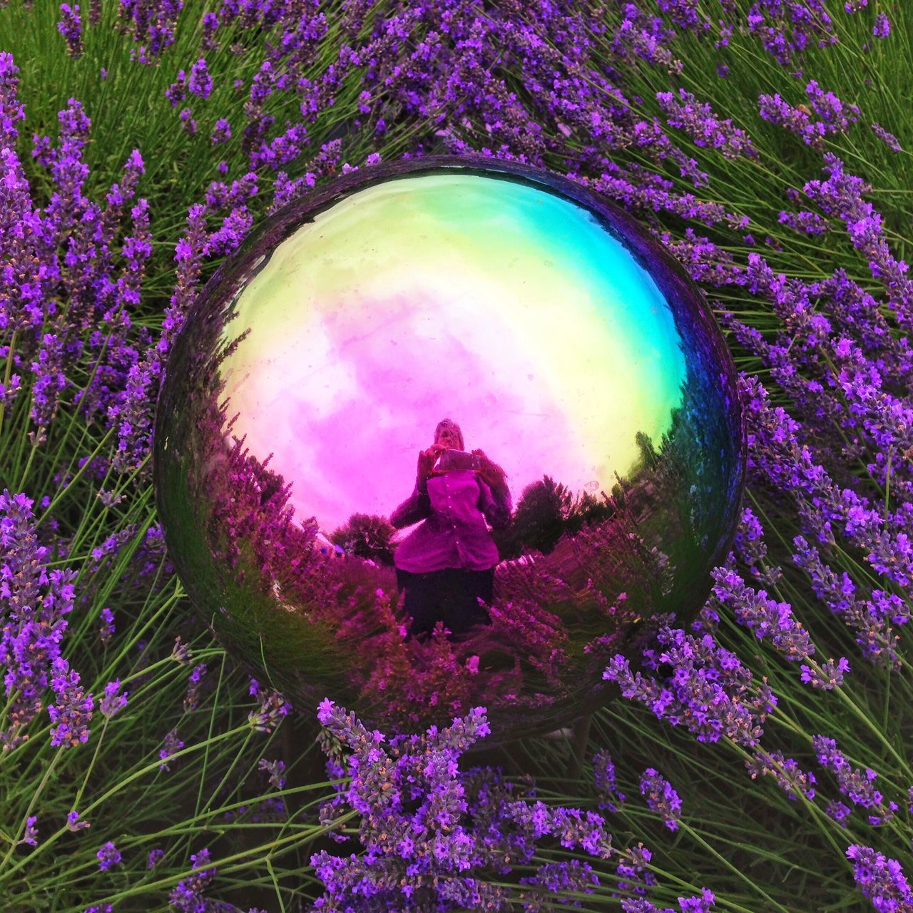 IPhoneography Lavendar Lavendar Flowers Garden Globe Garden Reflection Psychedelic Psychedelic_colors