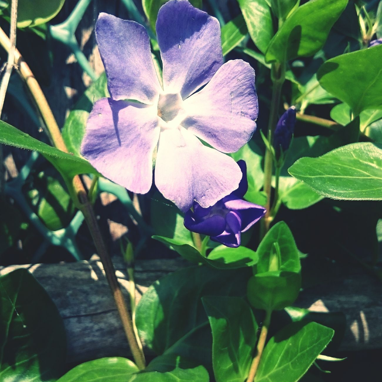 Tunisia Flowers Bni_Mtir Summer ☀