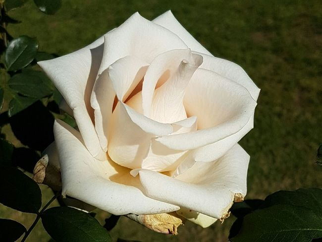 God's Glory On Display  From Where I Stand South Africa Roses_collection Beautiful Design