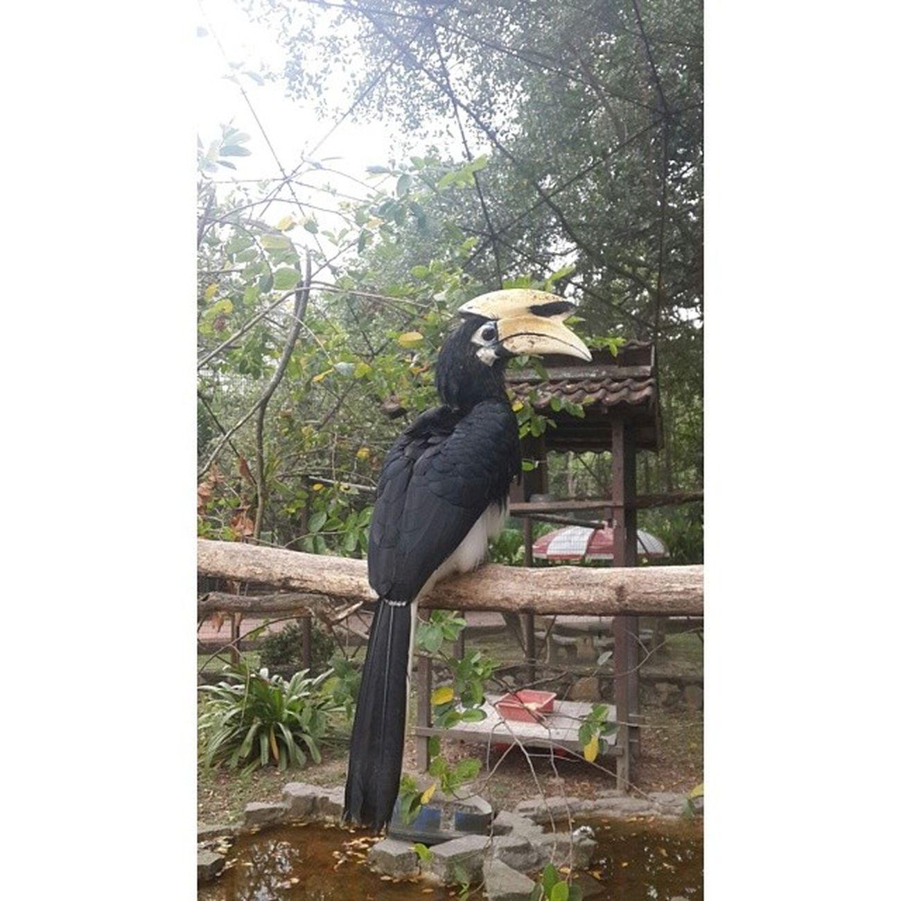 Taman Burung Sgs4 Photogrid