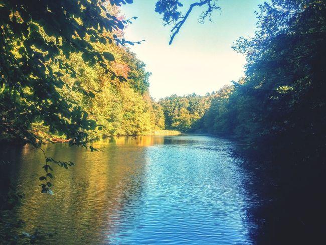 Lake Lake View Wood