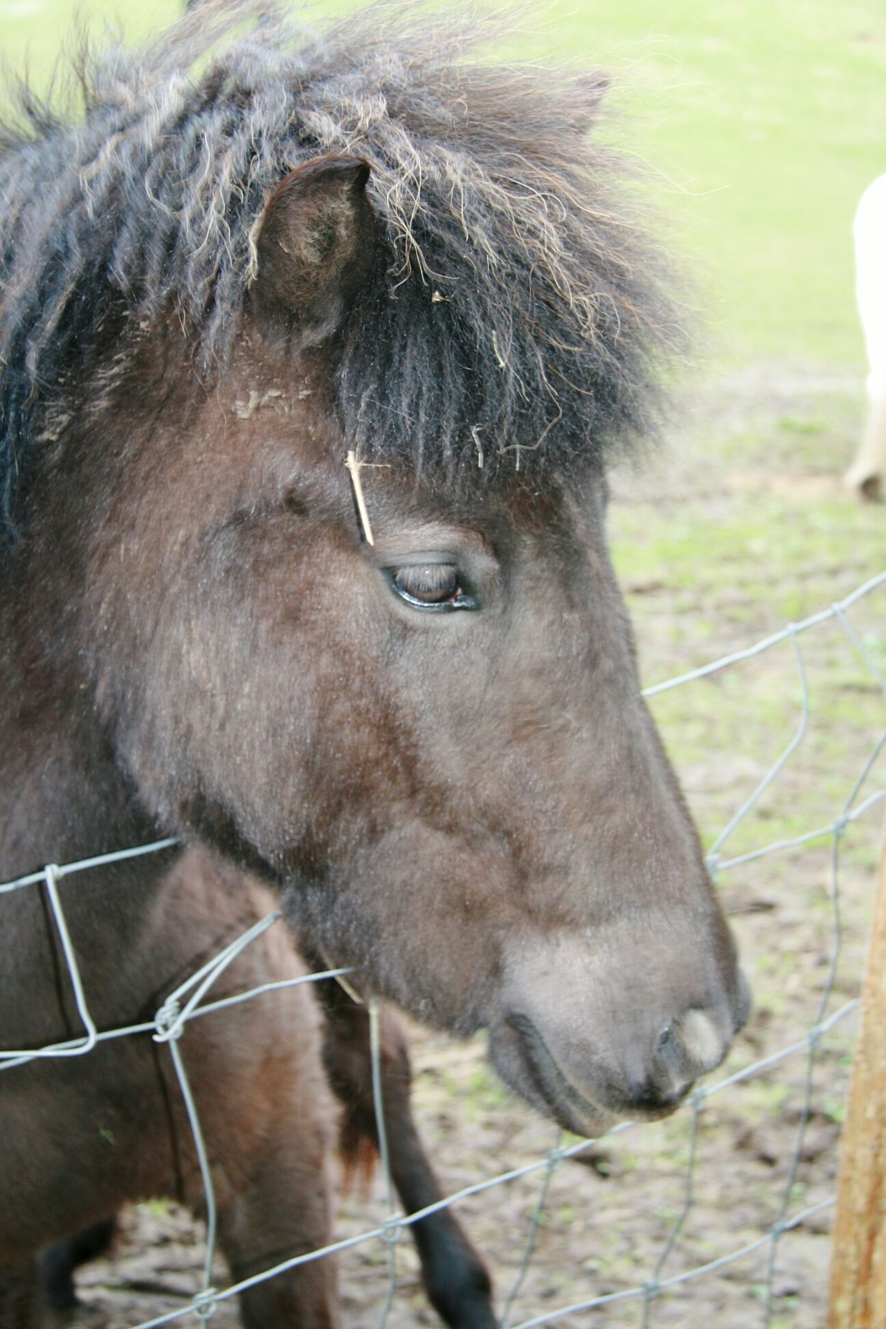 Heeeellllp i need a new Hairstylist a Hores Close-up Outdoors Nature Animal Themes One Animal Mammal Domestic Animals Beauty In Nature Check This Out Eye4photography  Canonphotography Canon 400d