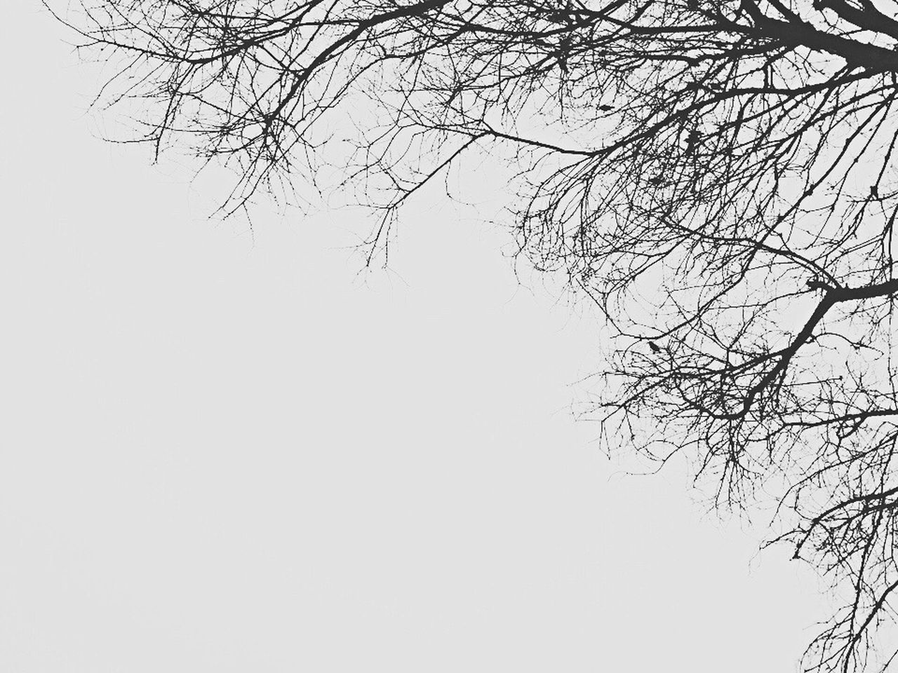 Blackandwhite Black And White Black & White Blackandwhite Photography Black And White Photography Copy Space Clear Sky Nature Bare Tree Branch Tree Low Angle View Beauty In Nature Tranquility Day No People Outdoors Scenics Sky Wintertime Winter Rome Italy