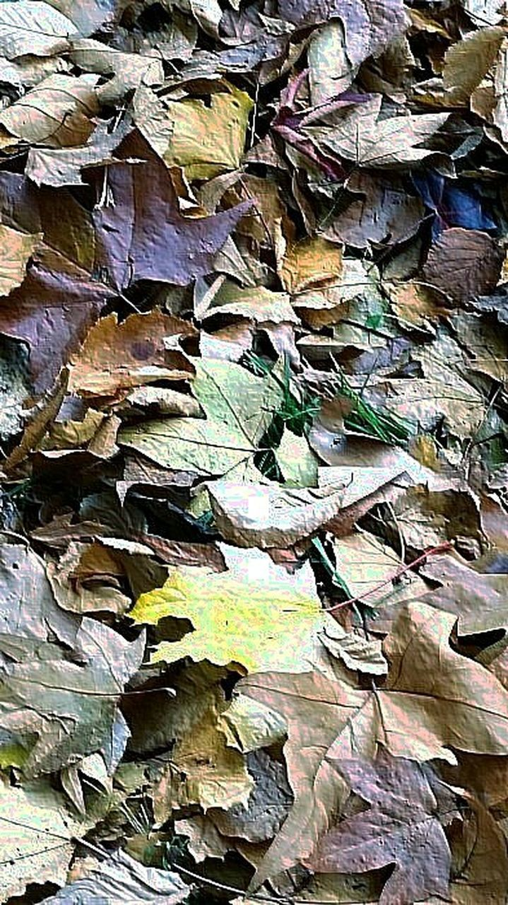 abundance, backgrounds, large group of objects, full frame, leaf, no people, outdoors, day, autumn, stack, close-up, nature