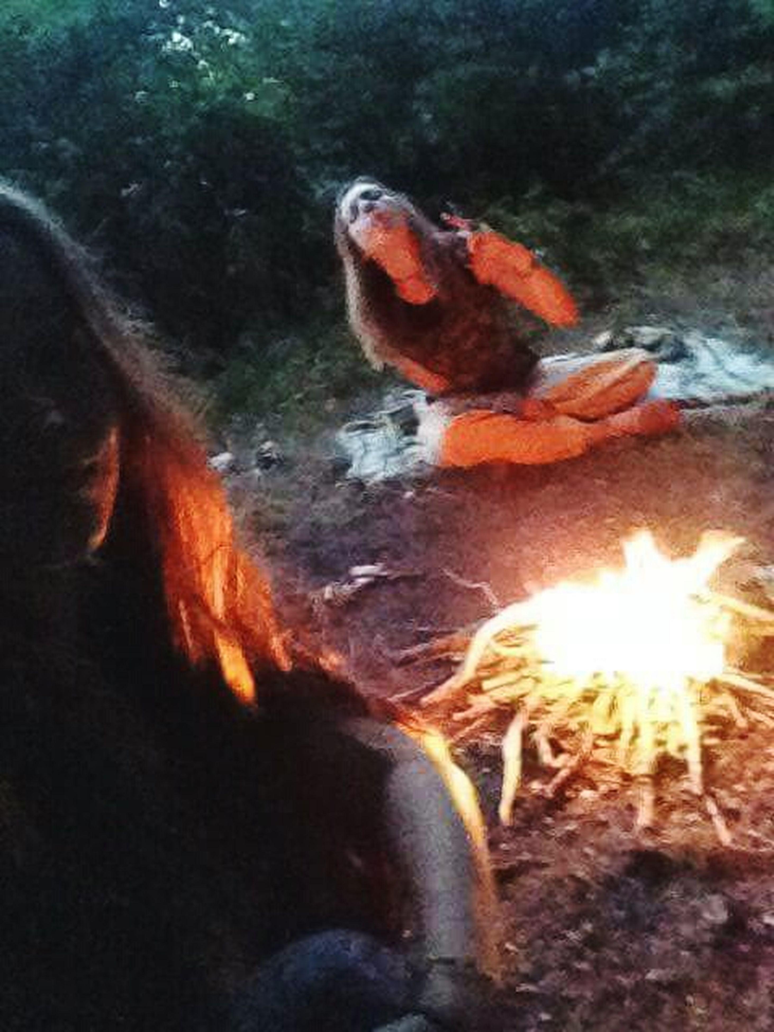 burning, flame, lifestyles, fire - natural phenomenon, leisure activity, orange color, heat - temperature, water, unrecognizable person, men, glowing, bonfire, sunlight, motion, nature, outdoors, standing