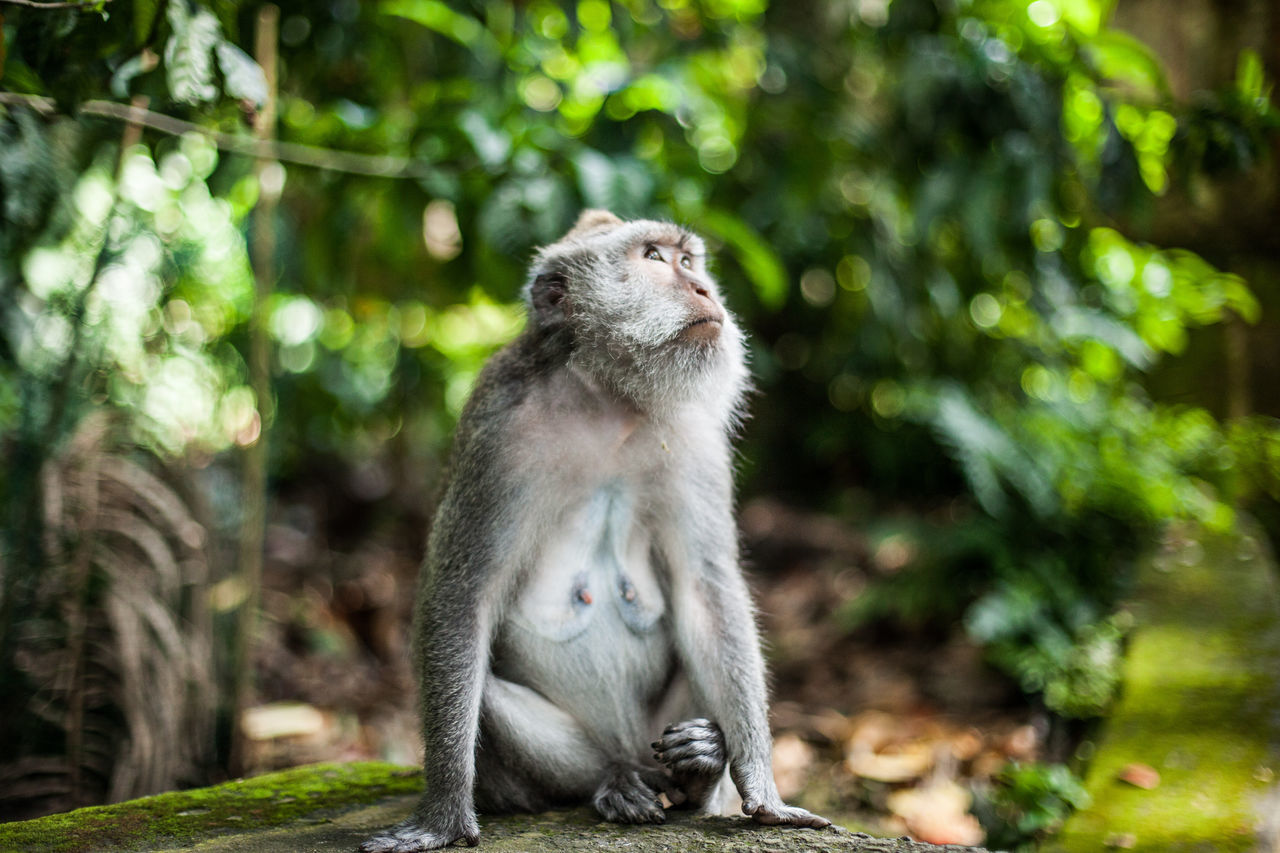 Beautiful stock photos of jungle, Animal Themes, Animals In The Wild, Day, Focus On Foreground