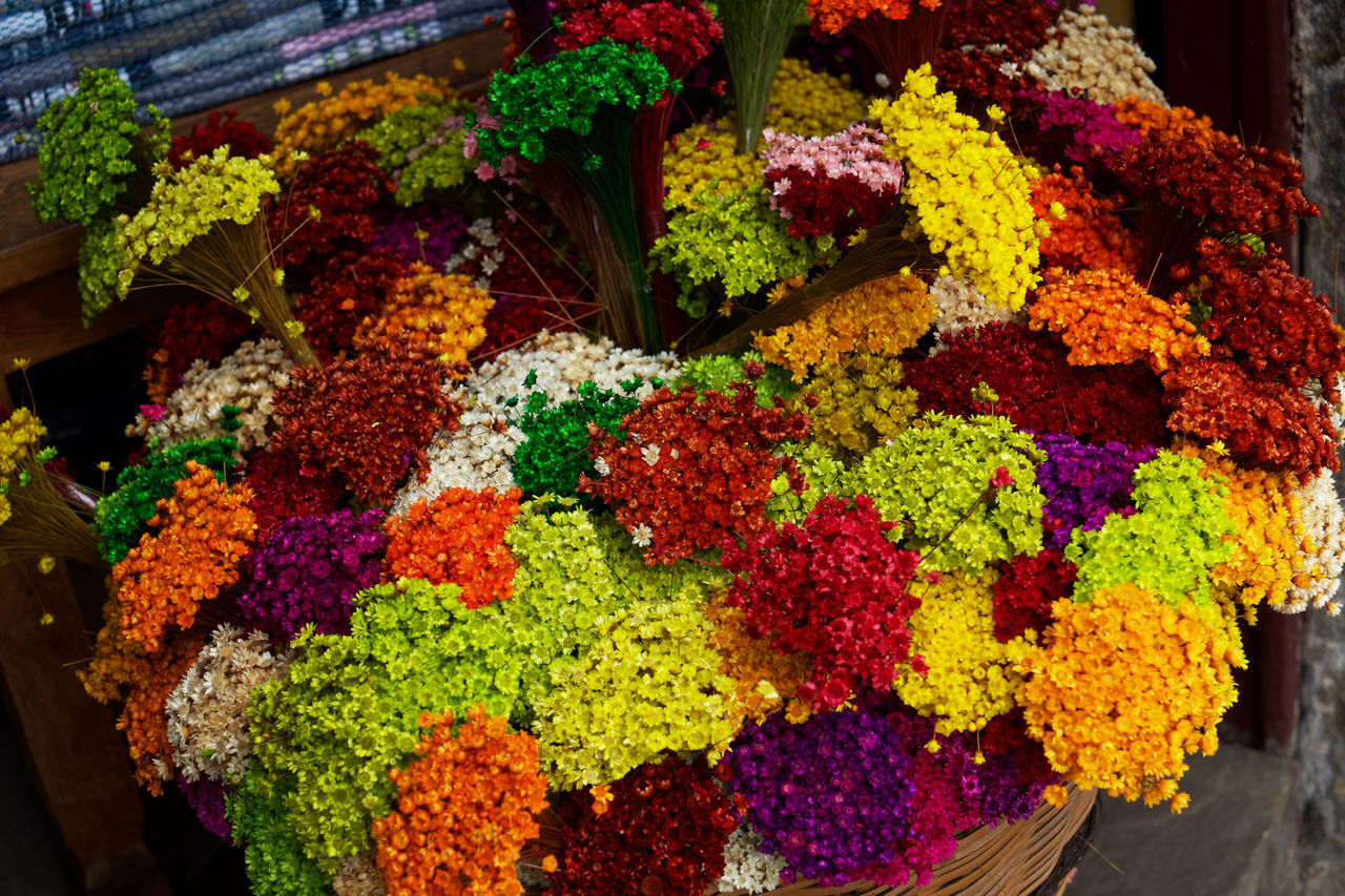 The EyeEm Collection Flower Flower Collection Flowers Streetphotography Street Photography Colour Of Life Colours Colourful Strawflower Straw Strawflowers Nature Nature_collection Nature Photography Beautiful Organized Beautifully Organized Selected for Premium Collection
