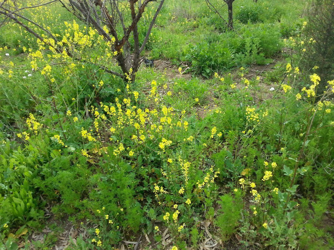 Nature Kalakchi