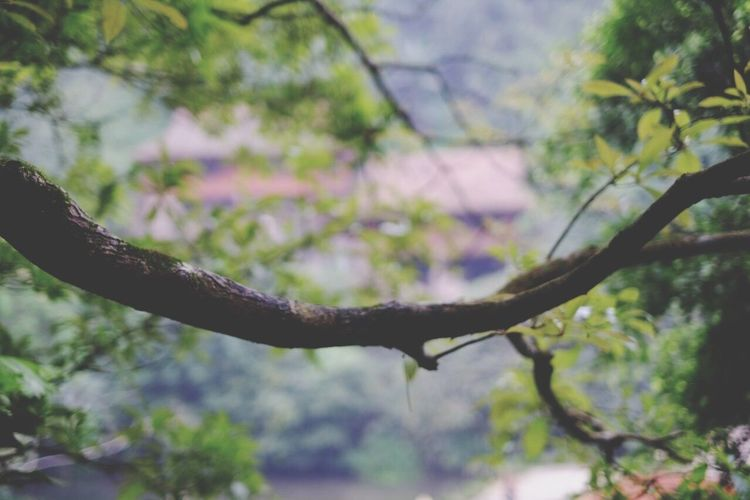 Ba Vi yoga retreat tranquility Growth Nature Tree Close-up No People Branch Outdoors Day Fragility Beauty In Nature Sky Bavi Vietnam Travel